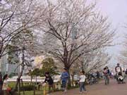 ohanami, cherry viewing, picnic